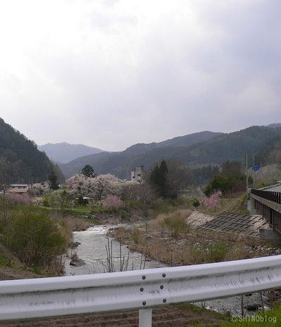 釜石市の桜