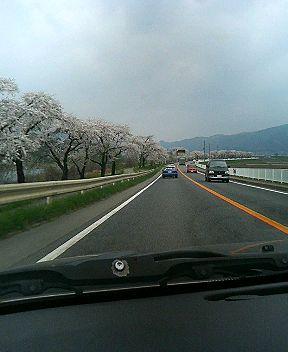 遠野の桜並木