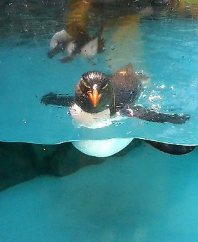 マリンピア水族館のペンギン